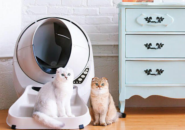 Litter-Robot-III-Open-Air cat