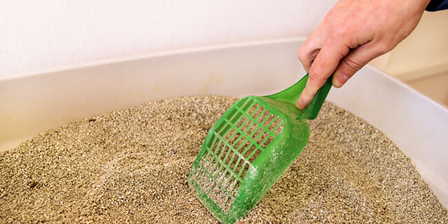 Best Way To Clean A Litter Box