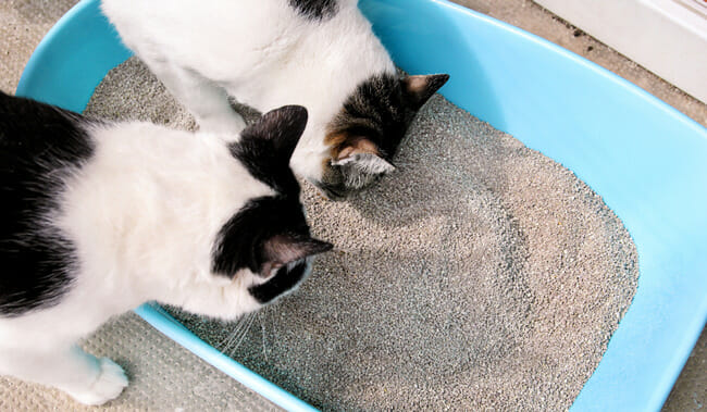 Ever-Clean Litter For Your Cat