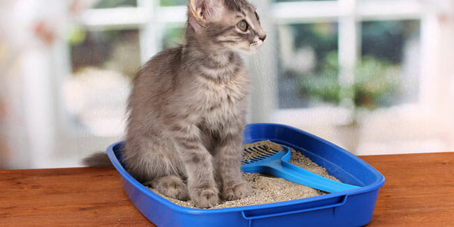 How To Introduce Your Cat To A New Litter Box