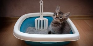 What Kind Of Litter Box Is Right For Your Cat