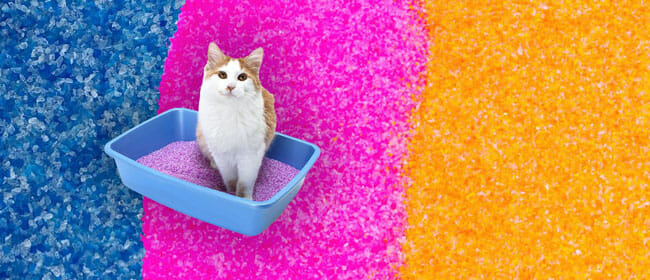 NEON Litter Cat Safe