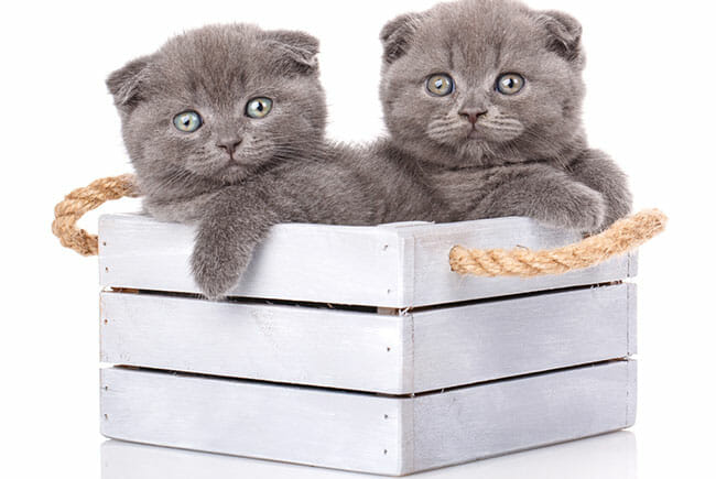 Best Litter Boxes For Two Or More Cats