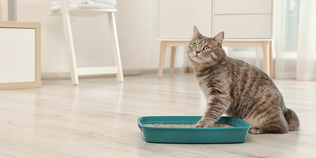 How Many Cats Can Use One Litter Box
