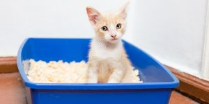 Young cat use the Litter Box